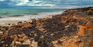 Küste des Cape Peron im Francois Peron National Park