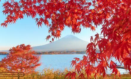 Work and Travel Japan – Alles was du wissen musst!