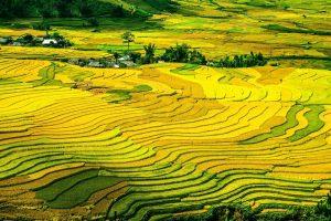 Top 5 Sehenswürdigkeiten in Vietnam platz 2 sapa reisfelder tal glrün reisterassen