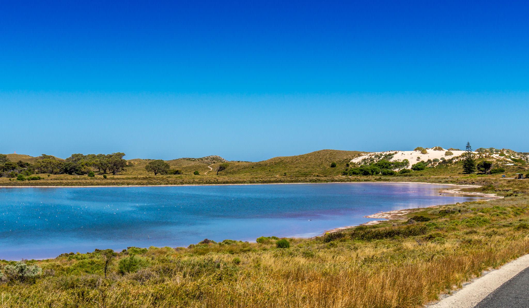 Pinker Schimmer auf einem Salzsee auf Rottnest Island nahe dem Pink Lake